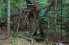 Rezerwat Bukowa Góra (jesień 2006)
